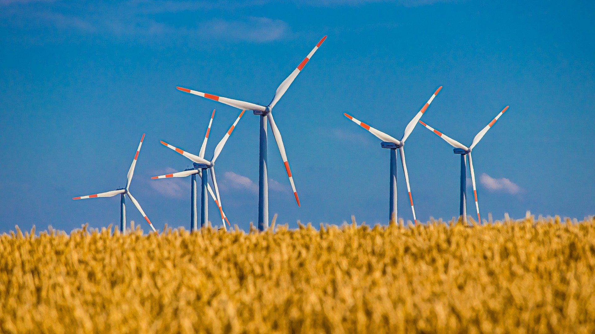 Windräder mit rot-gestreiften Flügel hinter einem Kornfeld